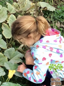 Child touching squash vine, blossom and leaves